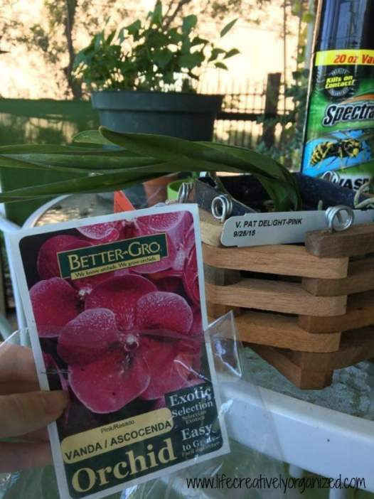 I love container gardening. After much trial & error with my plants, I have discovered some tips for better container gardening I'd like to share with you.