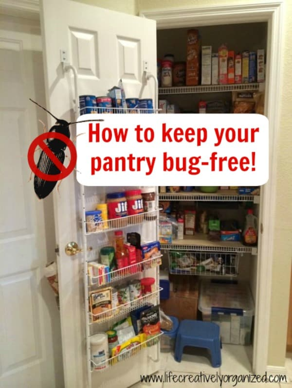 I live in Florida. We have LOTS of bugs here and they love our homes, especially the food in our pantries. So, here is how to keep your pantry bug-free.