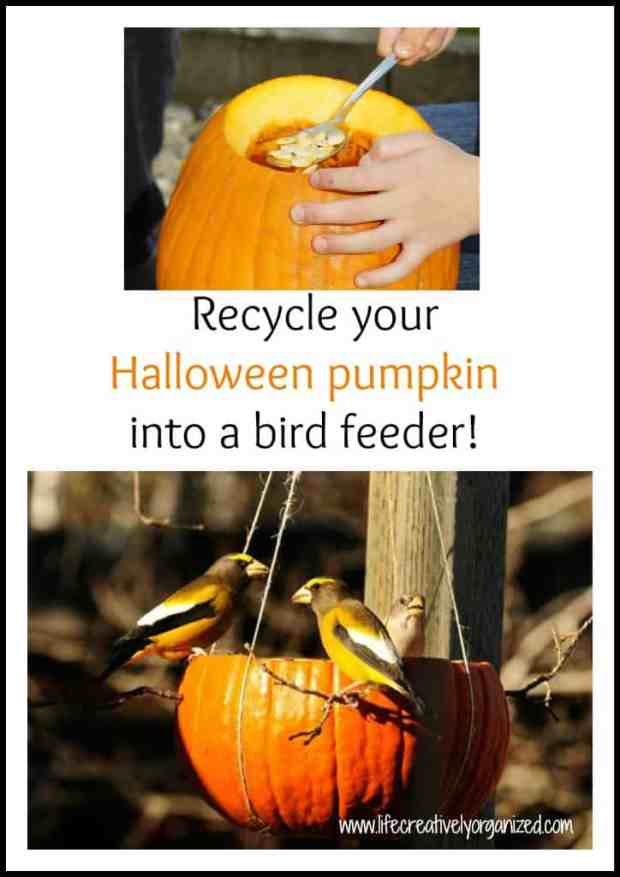 It's the day after Halloween and your jack-o-lantern is looking pretty sad. Here's a fun idea from Audubon Society. Make a Halloween pumpkin bird feeder!