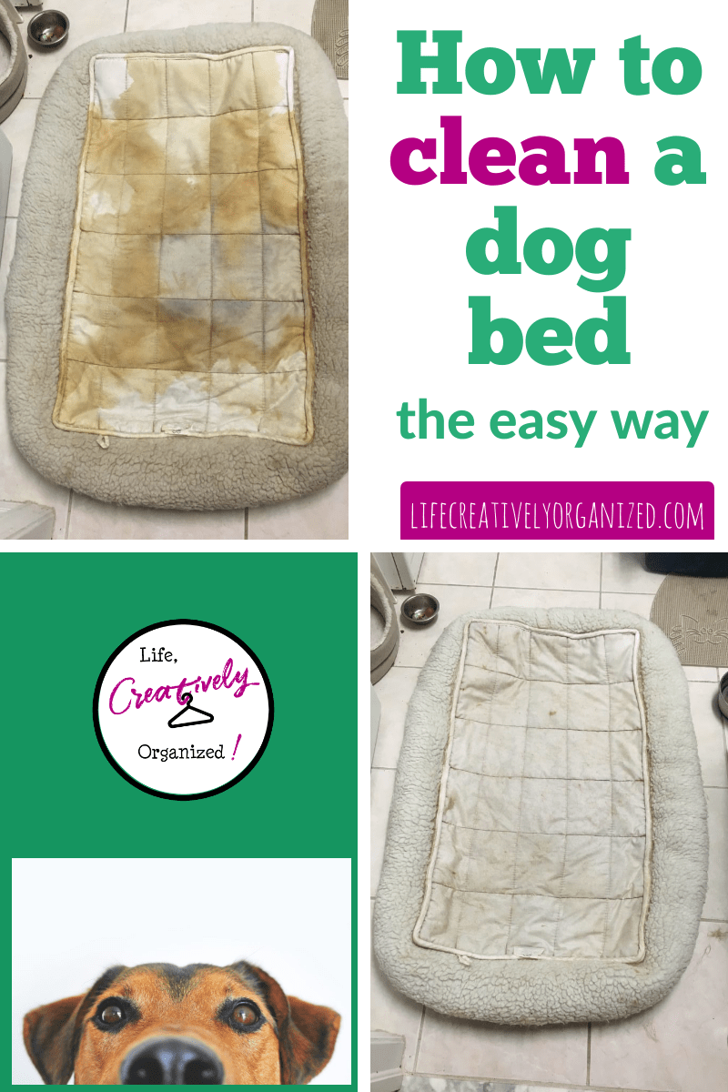 Clean the dog bed? It's easy! - LIFE
