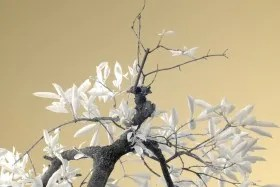 Life Energy Photograph - Infrared Series 4
