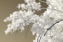 Infrared Series #8