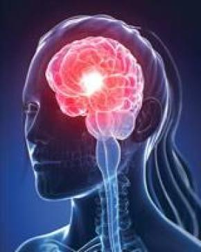 Taurine Grows New Brain Cells