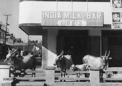 india milk bar mysore