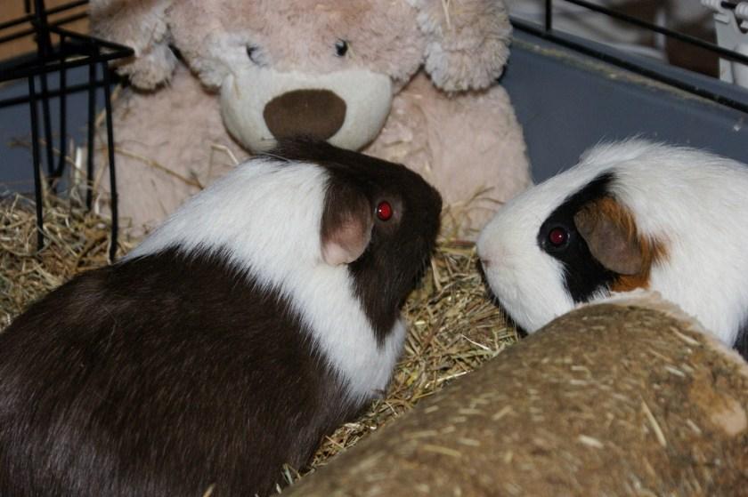Dobby and Sock