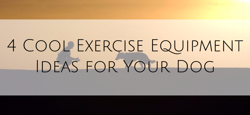 4 Cool Exercise Equipment for Your Dog