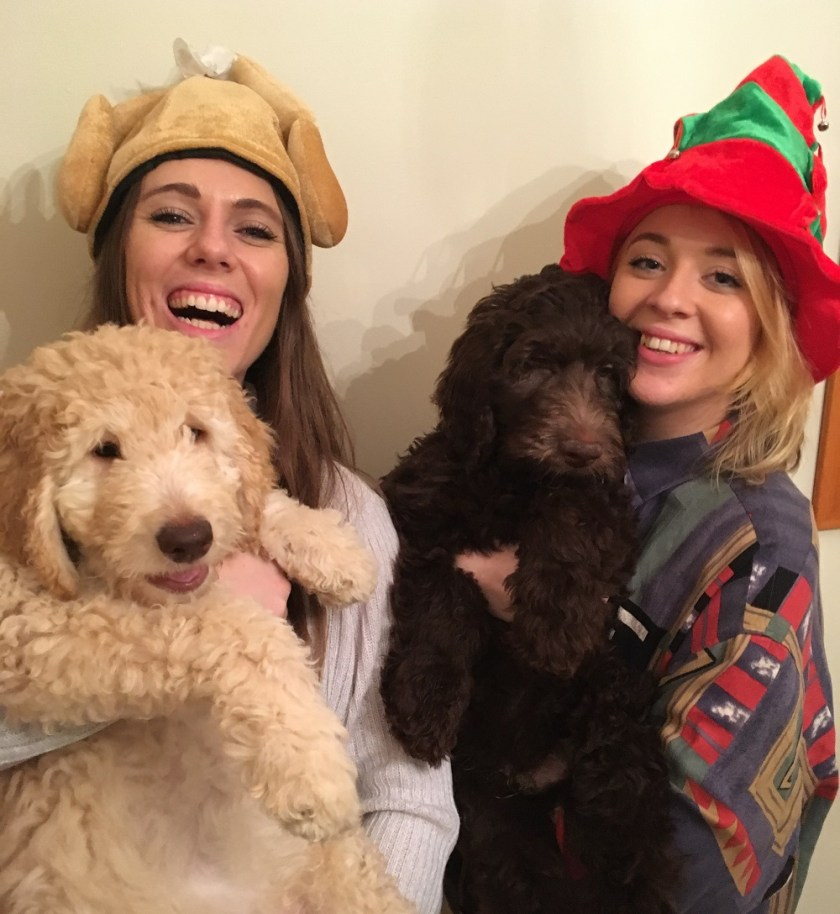 The Purrfect Present Ideas for your Pooch this Christmas by Steph at Hungry Harriet
