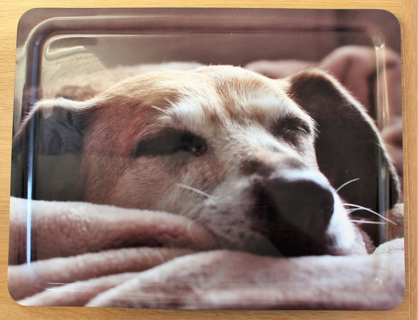 Personalised Lap tray from bags of love - picture of sally having a snooze.