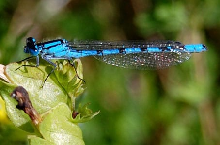 Dragonfly Colours