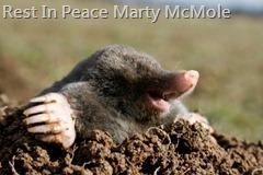 Marty J. McMole, Sr., Dead, Age 2