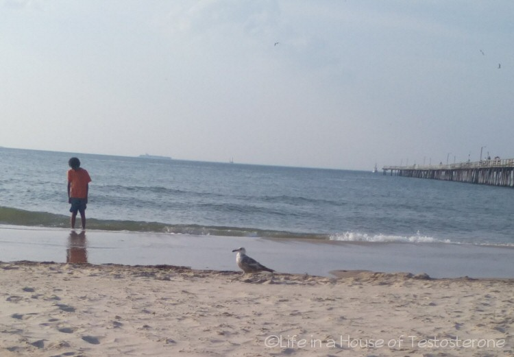 This seagull was checking out the action on the beach
