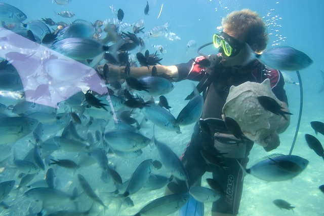 snorkeling with the sea animals