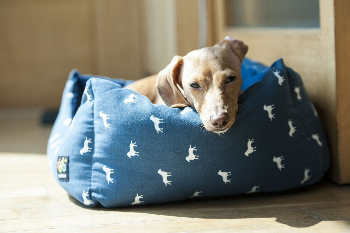 Get them a Cozy Bed - Keeping Your Dog In Good Health This Winter