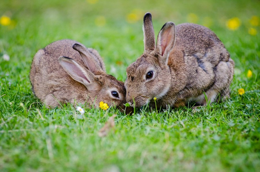 Bunnies are social creatures and do best in pairs