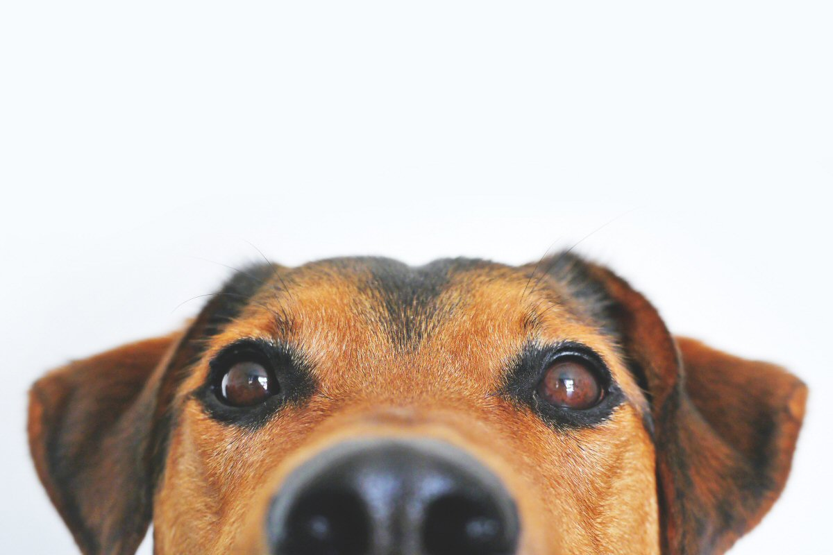 Essential Things Every Dog Owner Should Know
