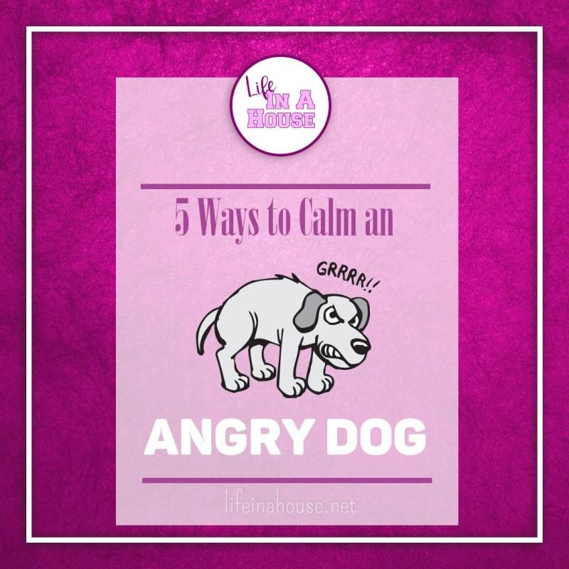 calm an angry dog
