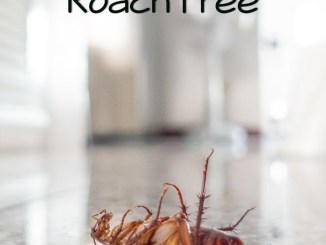 keep your home cockroach free
