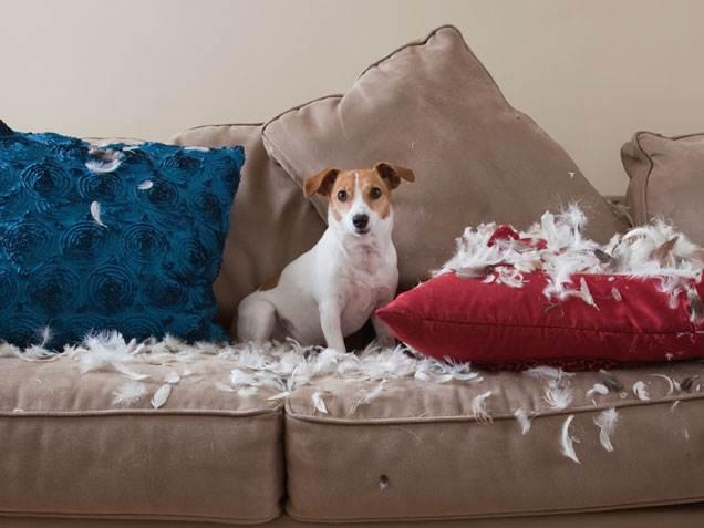 dog destroys pillows