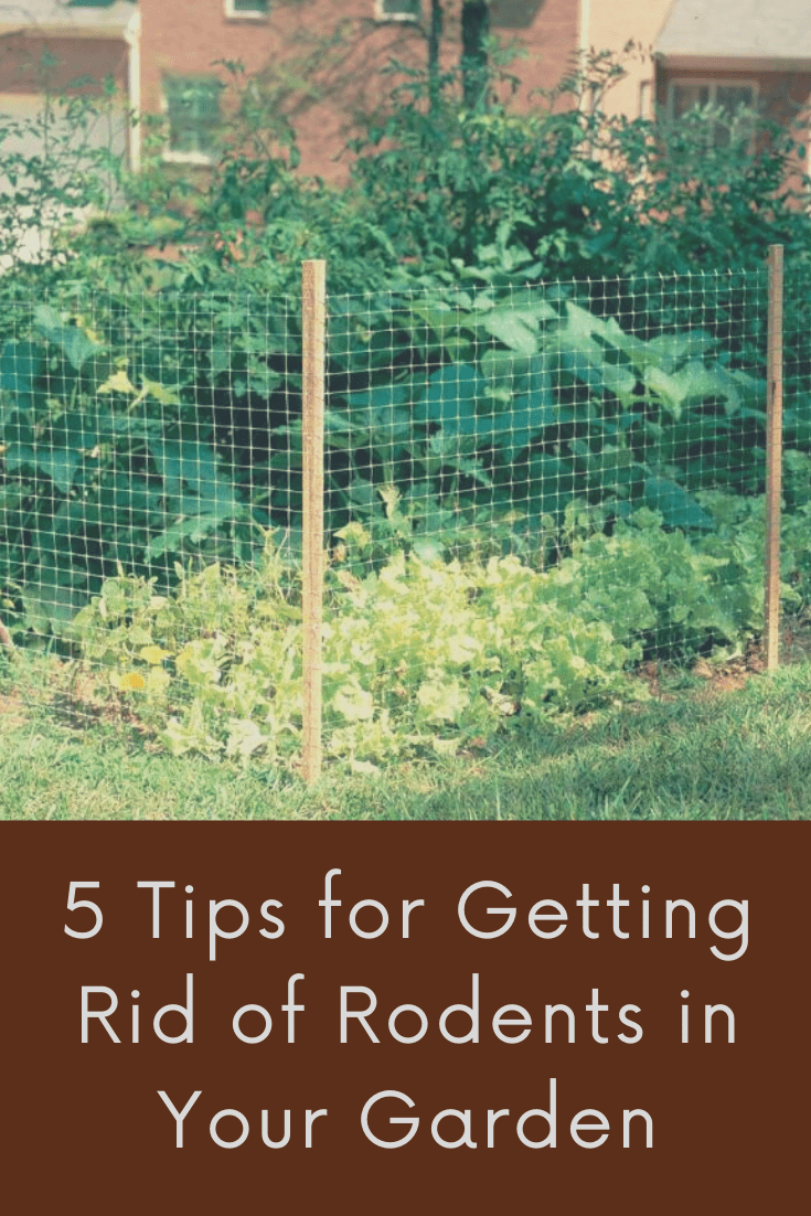 5 Tips for Getting Rid of Rodents in Your Garden