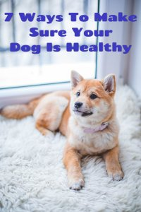7 ways to make sure your dog is healthy