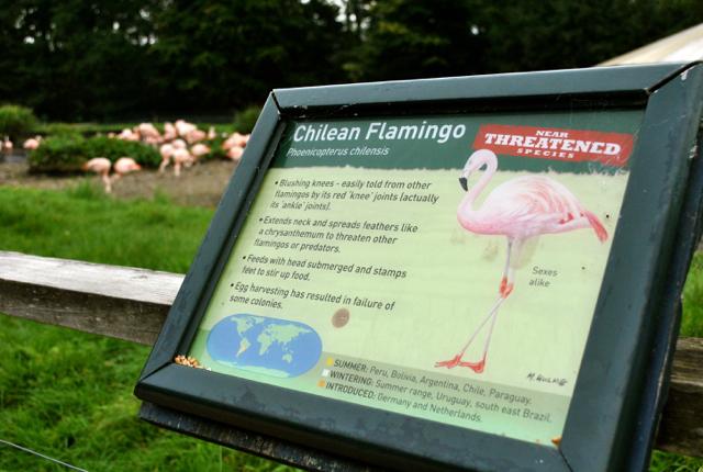 washington flamingos tyne and wear