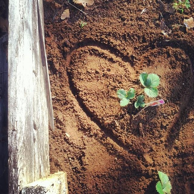 Image result for heart soil + image