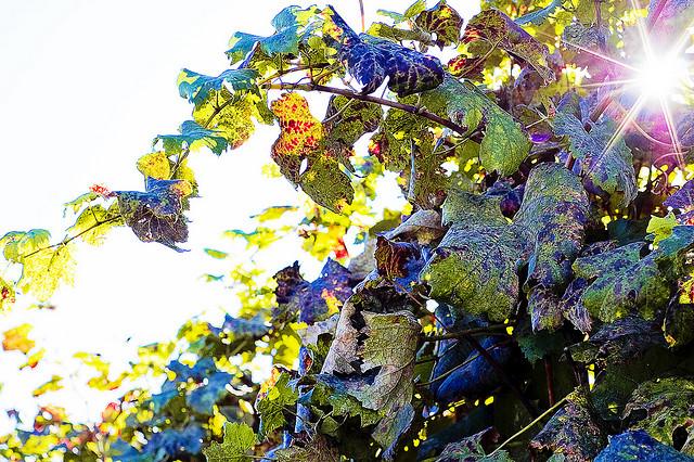 vineyards tour