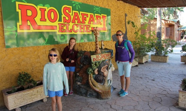 On holiday in Alicante and your children like animals? Then Rio Safari might just be the place to visit..