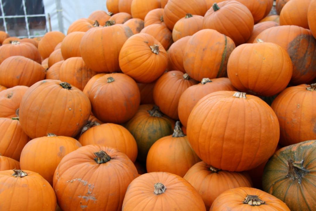 Pumpkins - 1 (7)-min