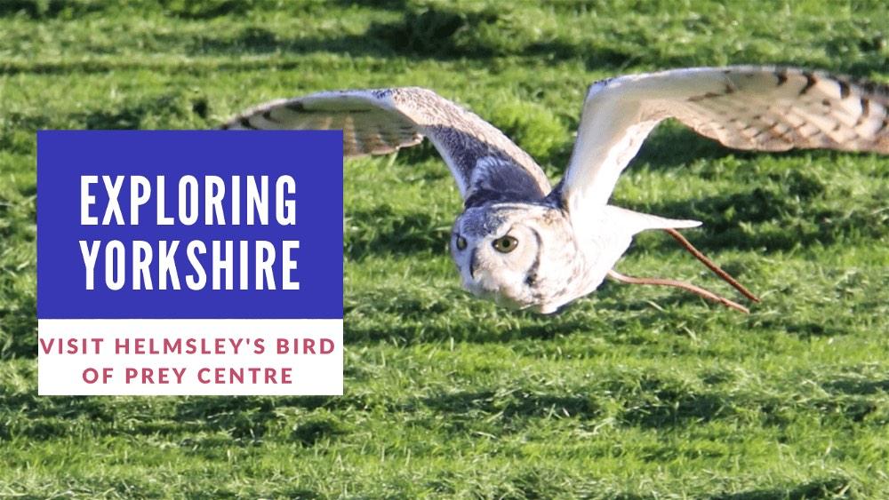 Bird of Prey Helmsley-opt