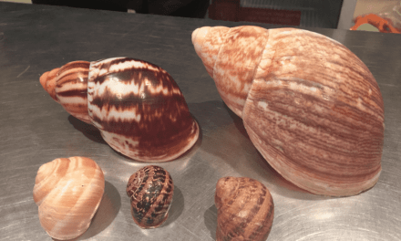 A first for LifeinourVan – French Passion stopover on a Snail Farm in NE France