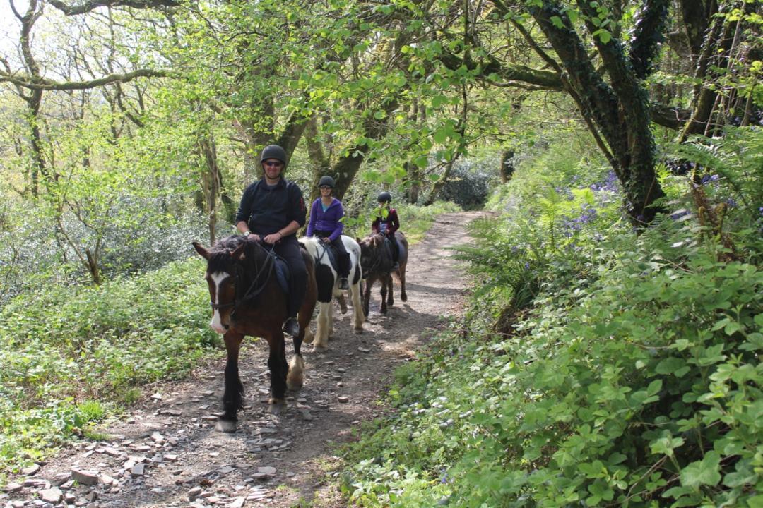 Horse Riding - 17-min