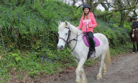 Horseback Adventures through Pembrokeshire's Bluebell Woods