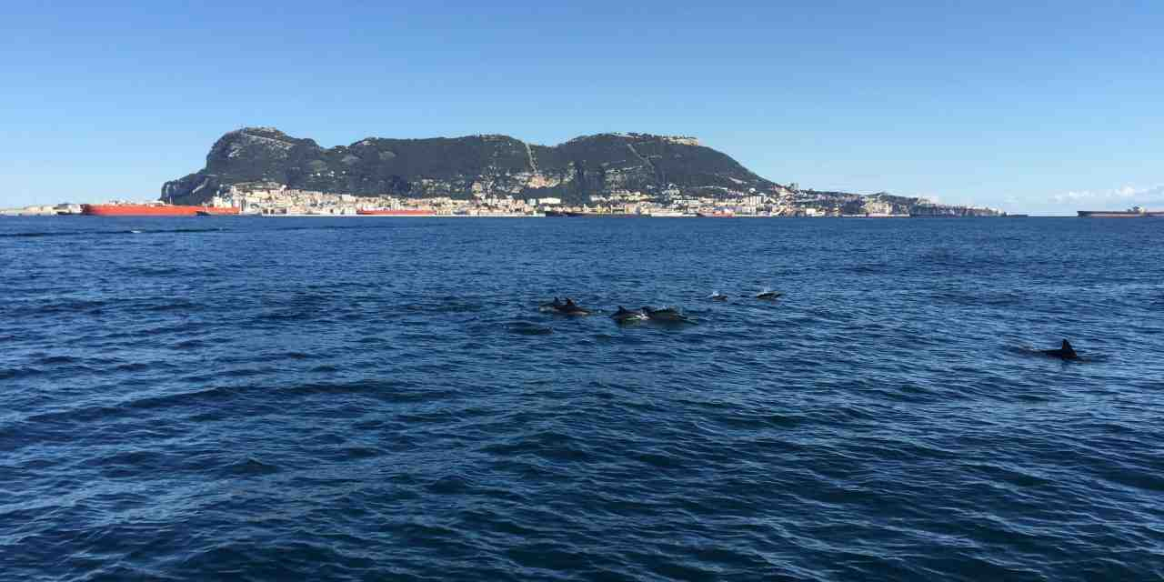 Gibraltar in the morning | Stunning marina views