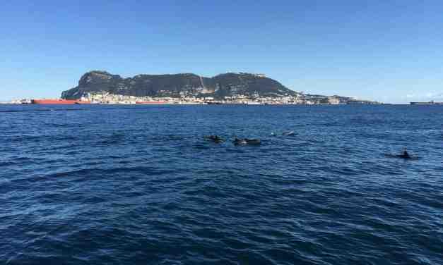 Gibraltar in the morning   Stunning marina views