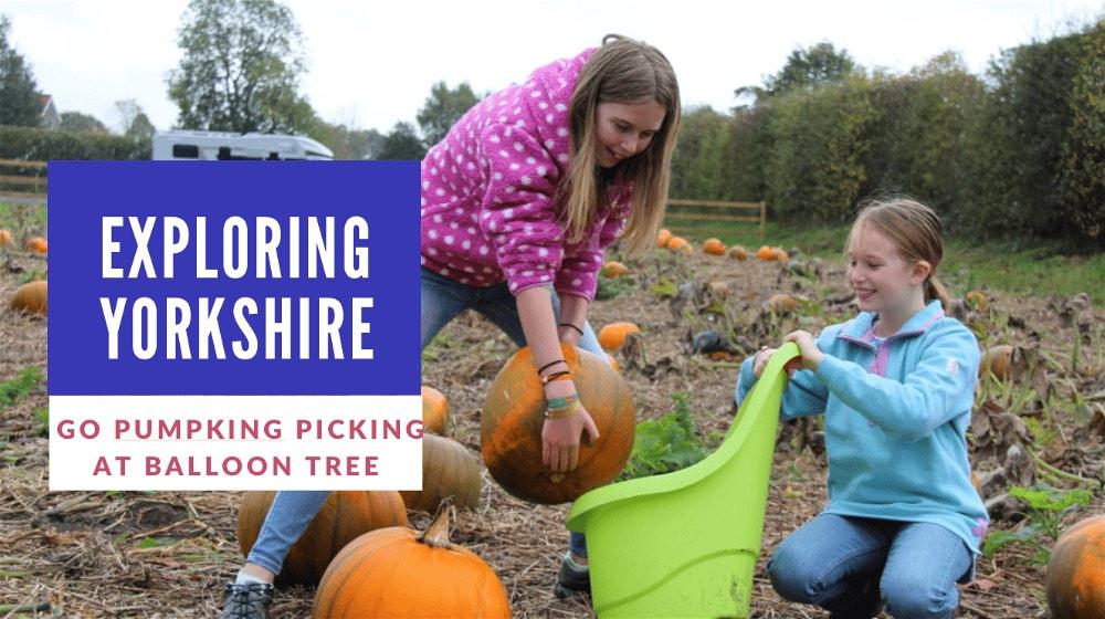 Pumpkin Picking-opt