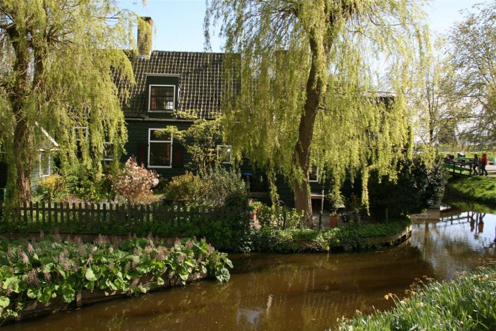 Tulip Fields Holland18