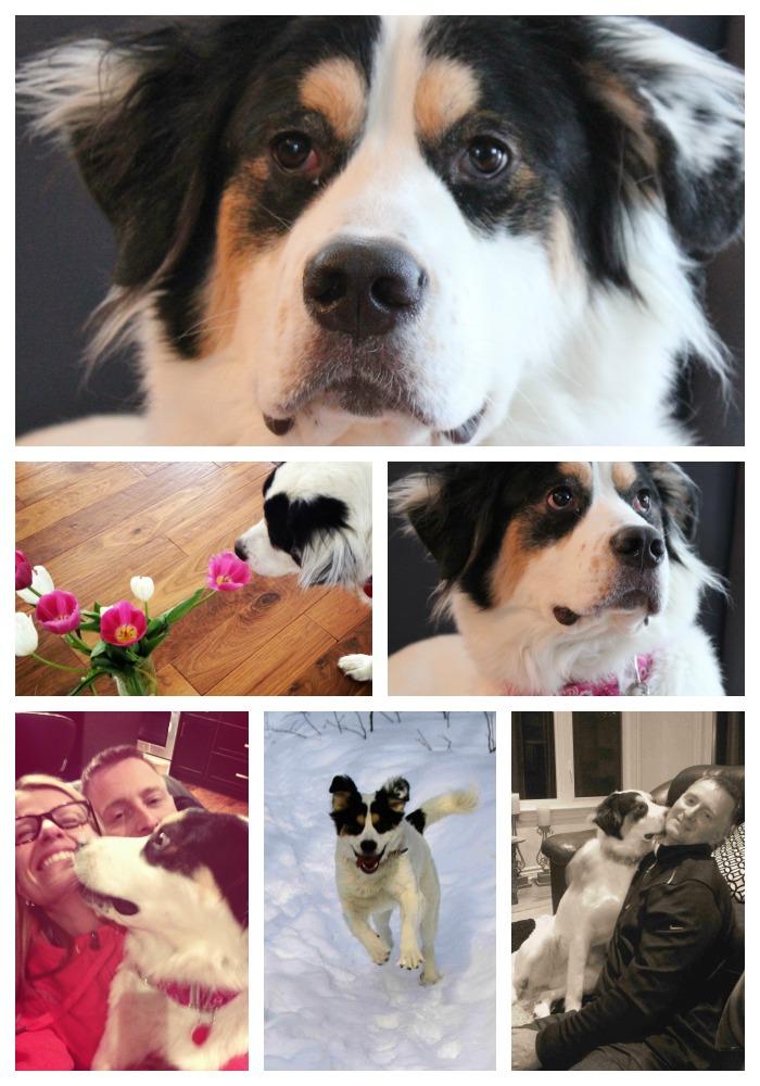 hopeful again hearts rescue dog adoption tips life in pleasantville. Black Bedroom Furniture Sets. Home Design Ideas