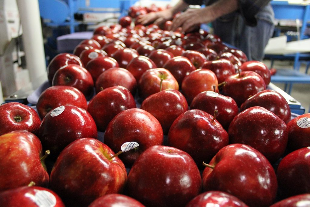 red prince apples, packed onto the tray  for the box (2)