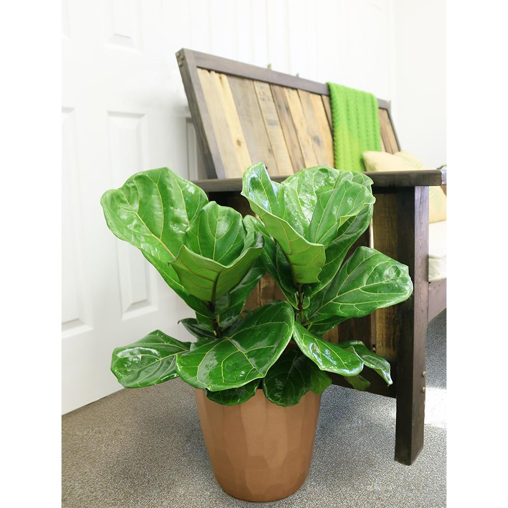 Mother's Day houseplant gift Rona