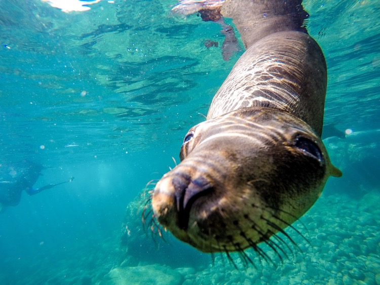 Best Adventure Excursions in Cabo, swimming with sea lions