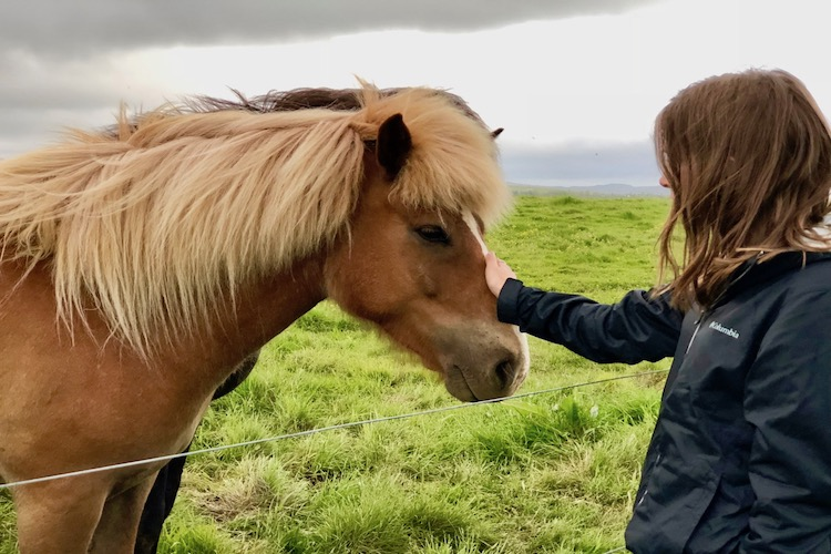 go to Iceland, horses, golden circle, travel Iceland by car