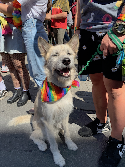 Even dogs came out to Capital Pride