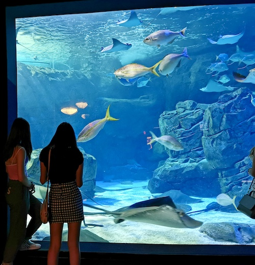 Toronto with teens, visit Ripley's aquarium in the evening