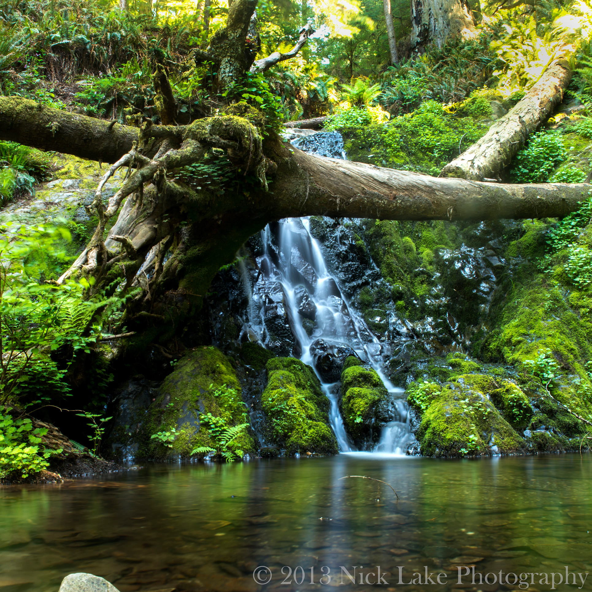 A gentle waterfall drops into a tranquil pool at the end of the Boy Scout Tree Trail