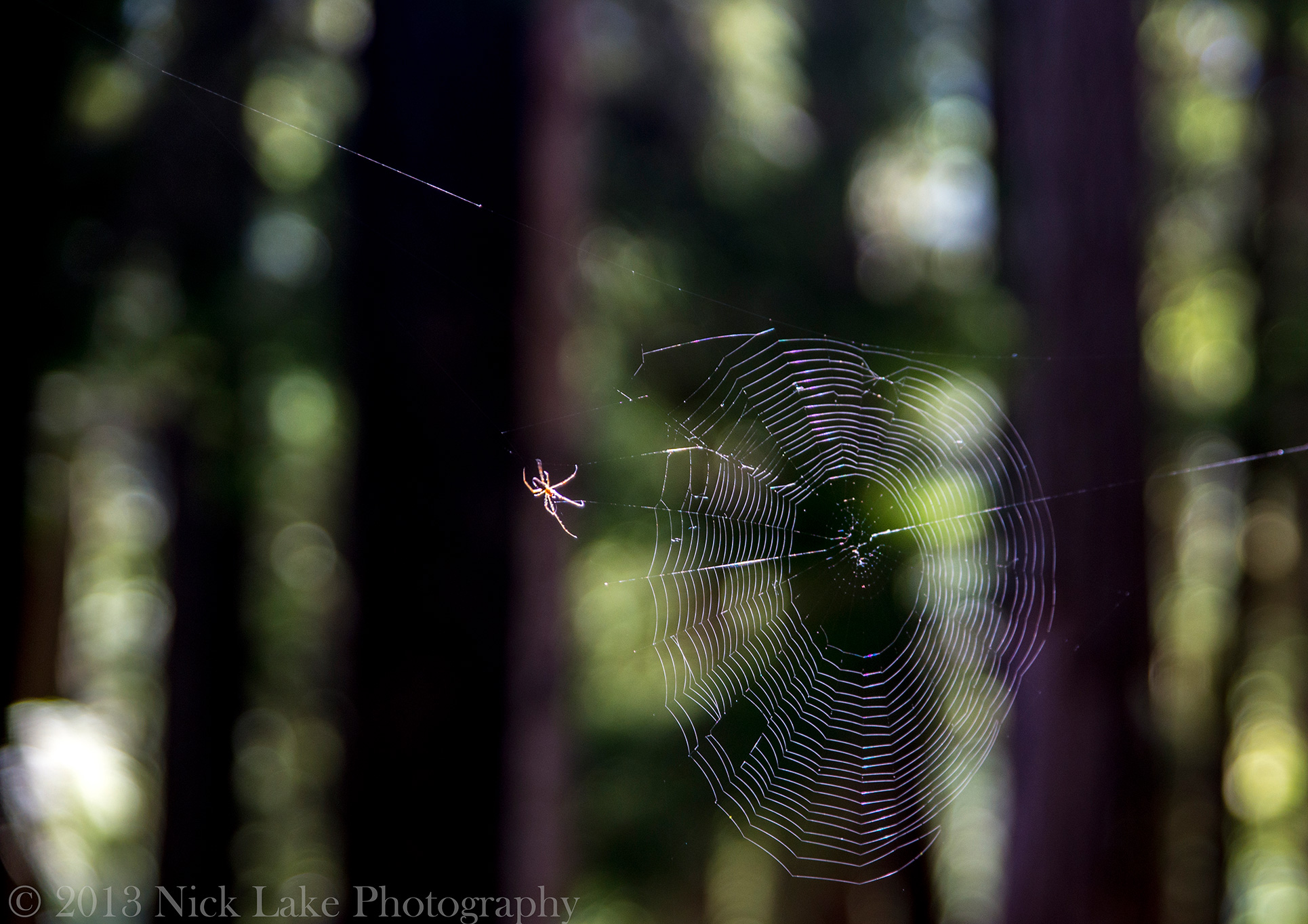 A spider perfects his web, hoping for a morning meal