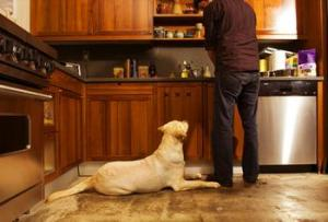 6-Truths-About-And-Tips-For-Working-From-Home-When-You're-A-Dog-Owner-6