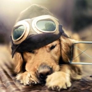dog_pilot_plane_sunglasses_hat_44848_1024x1024