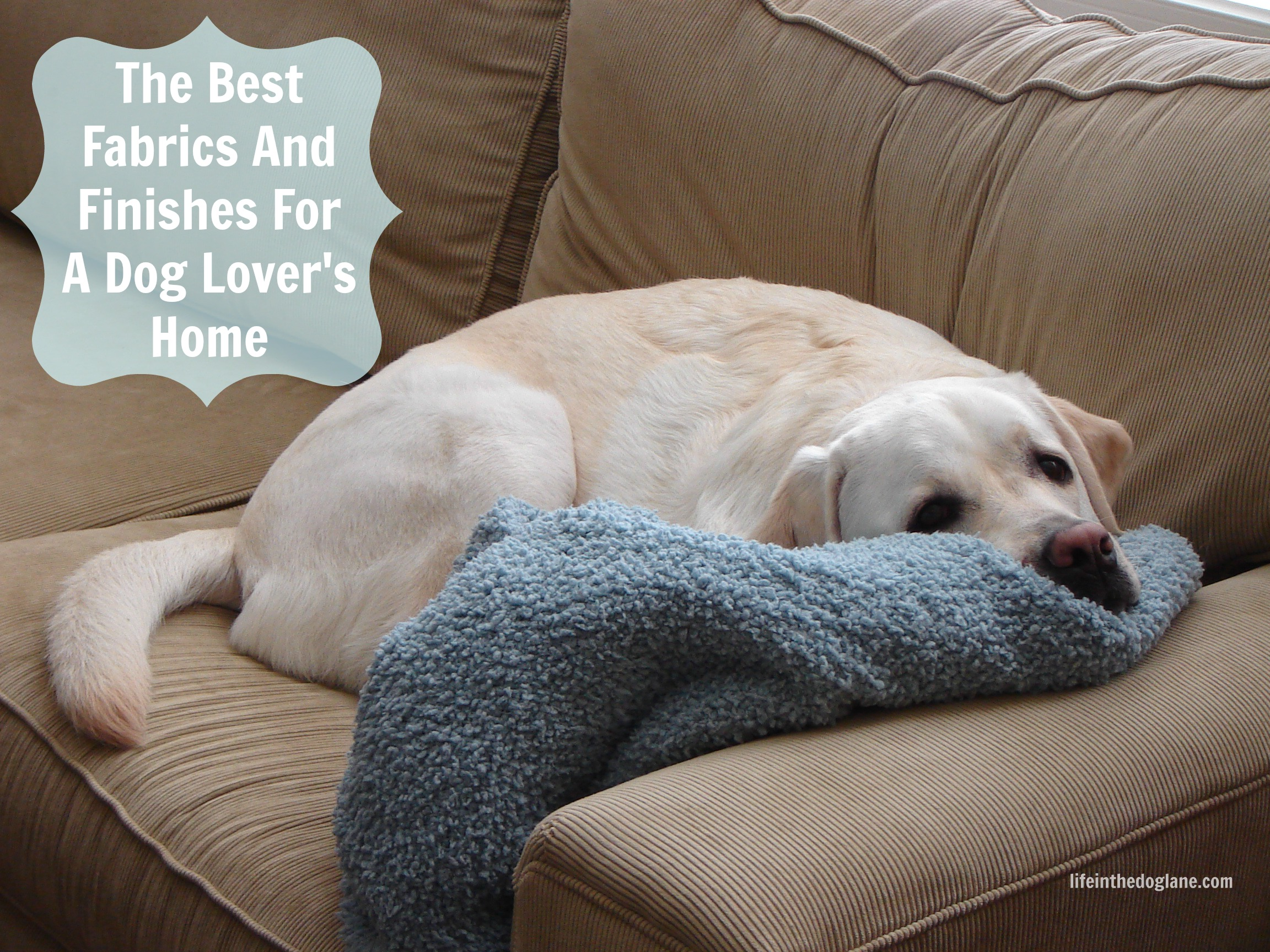 The Best And Worst Fabrics And Finishes For A Dog Lover S Home