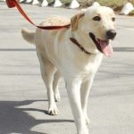 5 Fundamental Considerations For Your Dog-Walking Team